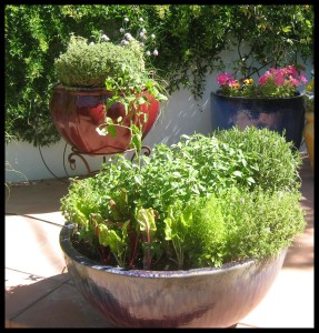 Lush Potted Herb Garden