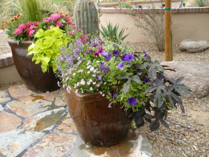 Late Summer Potted Desert Flowers